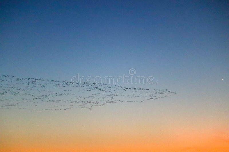 De migratie van de zonsondergangvogel royalty-vrije stock foto