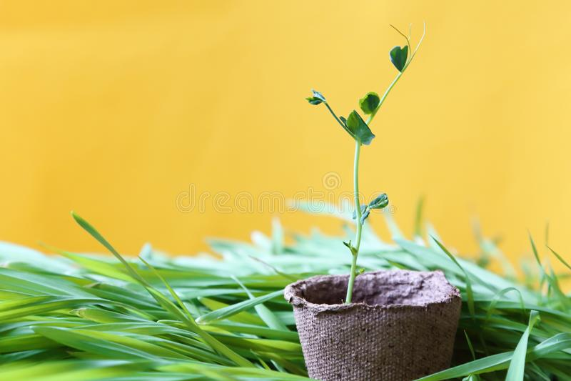 De milieuvriendelijke achtergrond van de de lente zonnige tuin in geel Jong p stock fotografie