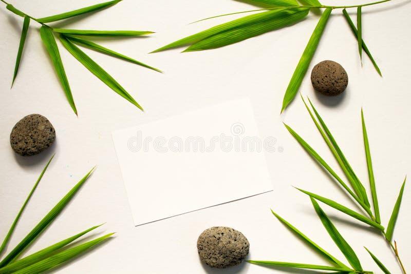 De minimale vlakte legt met groene blad en steen Bamboeblad en overzeese kiezelsteen op witte achtergrond royalty-vrije stock afbeelding