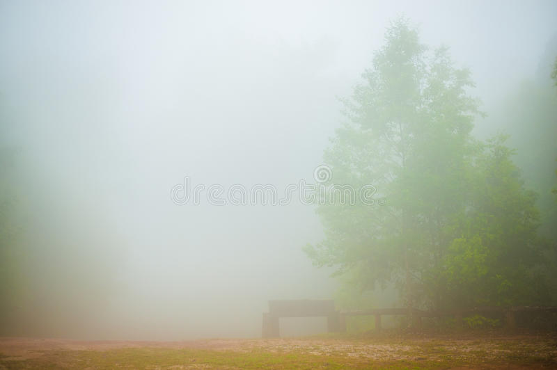 De mist stock afbeeldingen