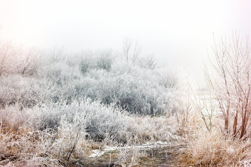 De mist en de rijp van de ochtendmist - hoar op boom en struik, de winterlandschap royalty-vrije stock afbeelding