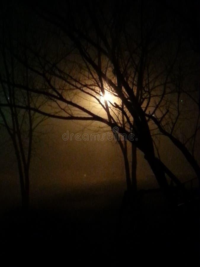 De mist kruipt in de nacht stock foto