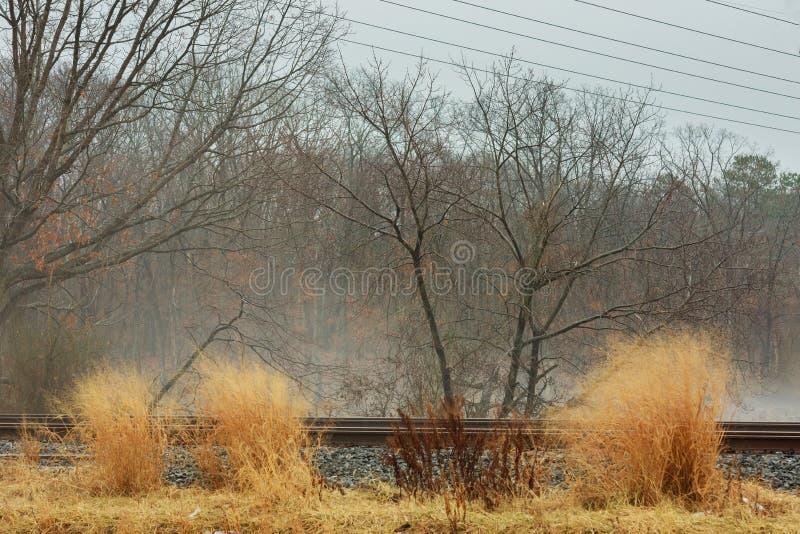 de mist regenachtige dag van de de herfstmist in het bos stock fotografie