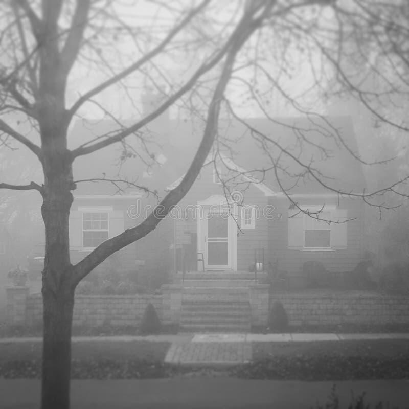 De mist Riet met regendruppels royalty-vrije stock afbeelding