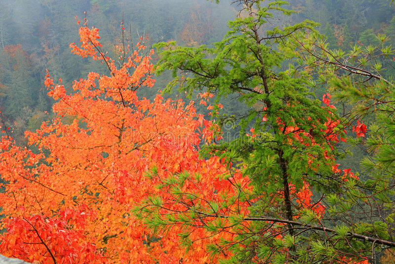 De Mist van de herfst royalty-vrije stock foto