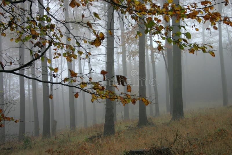 De mist van de herfst stock foto's