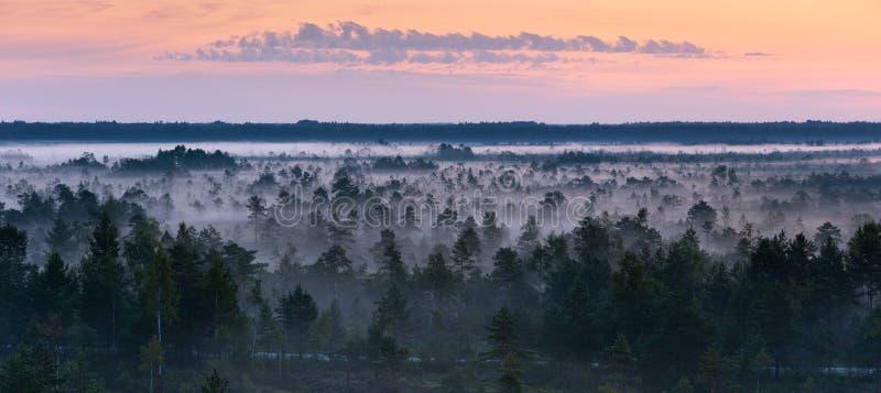 De mist van de ochtend in een moeras royalty-vrije stock afbeelding