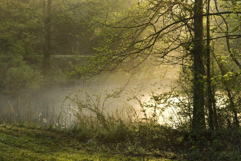 De mist van de ochtend op Vijver royalty-vrije stock afbeelding