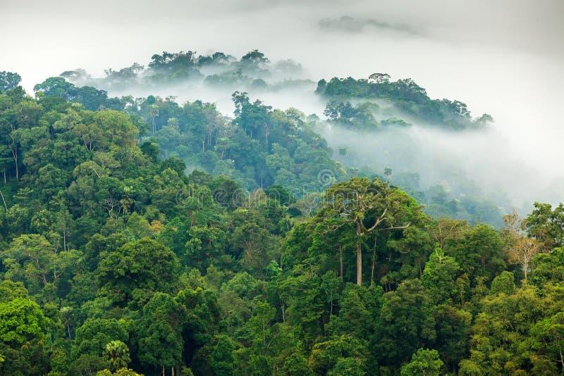 De mist van de wildernisochtend stock fotografie