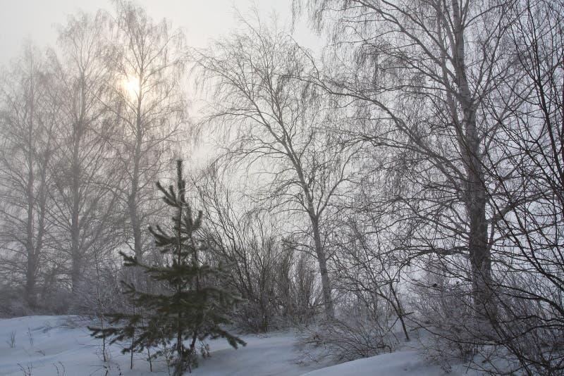 De mist van de winter stock afbeeldingen