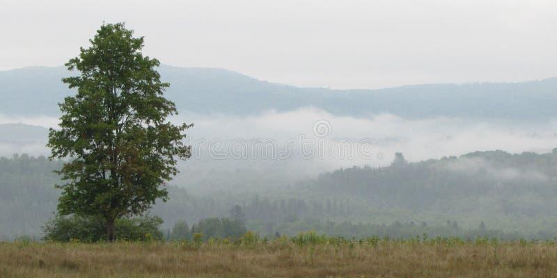 De Mist van de Madawaskavallei, Canada stock foto
