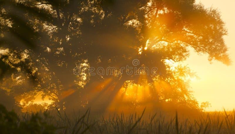 De Mist van de ochtendboom royalty-vrije stock foto