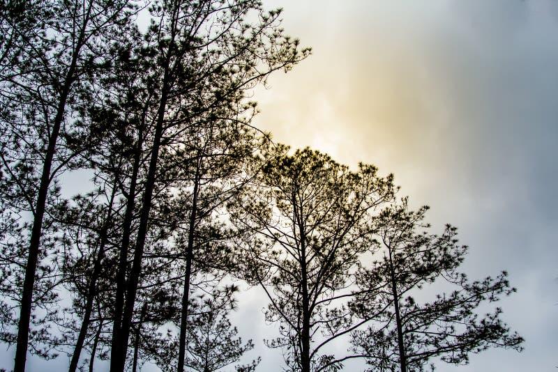 De mistige bomen in een bosboom bedekt textuur stock fotografie