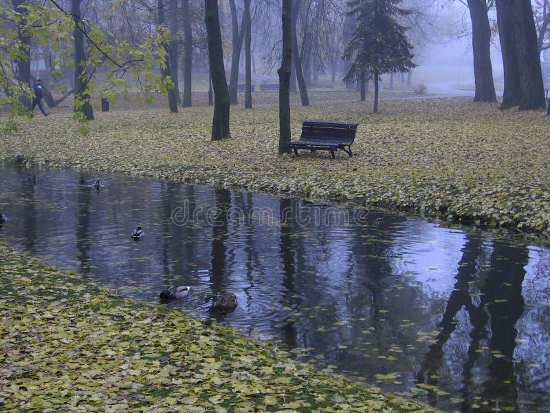 De mistige herfst De laatste bladeren vallen neer stock afbeelding