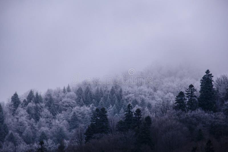 De mistige ochtend van de winter Bomenhoogtepunt van sneeuw in mist wordt behandeld die royalty-vrije stock afbeeldingen