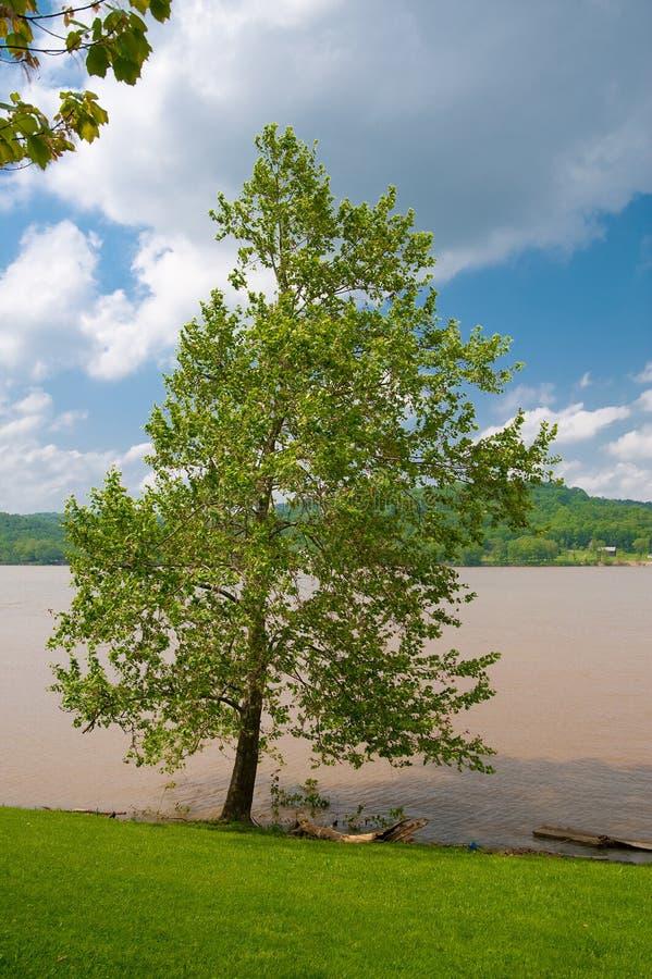 De modderige Rivier van Ohio royalty-vrije stock foto