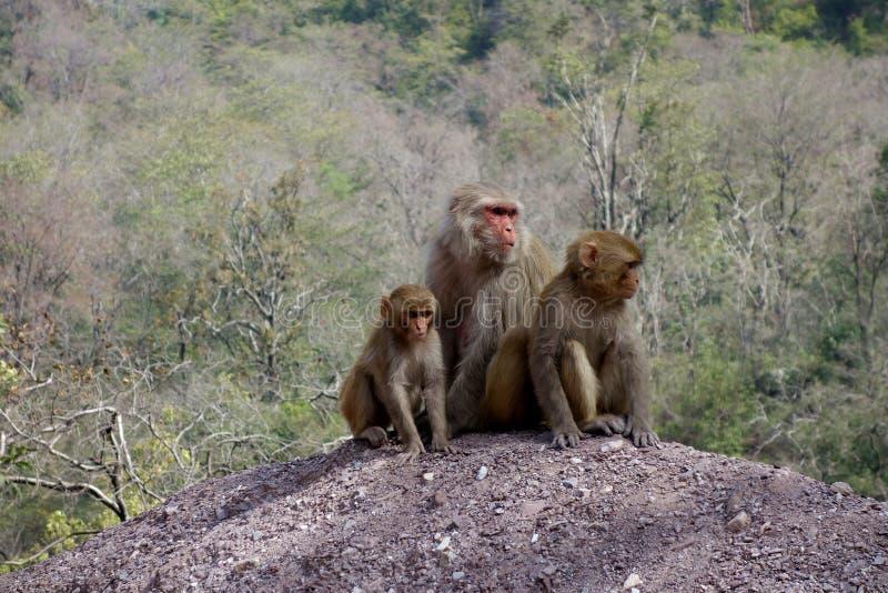 De Moeder en de Kinderen van de Macaqueaap royalty-vrije stock afbeelding