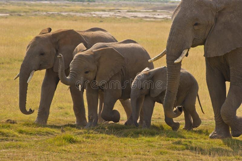 De moeder van de olifant en haar drie kinderen royalty-vrije stock afbeeldingen