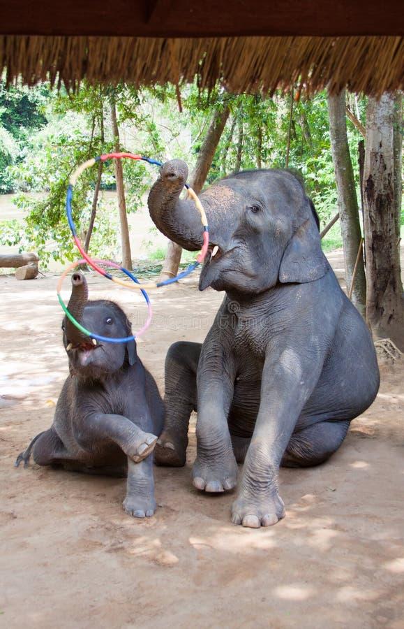 De moeder van de olifant met haar kalf royalty-vrije stock afbeelding