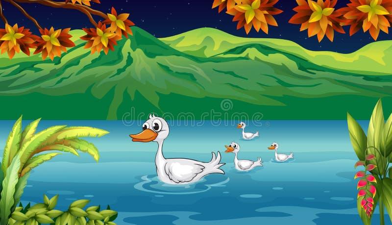 De moedereend en haar eendjes in de rivier royalty-vrije illustratie