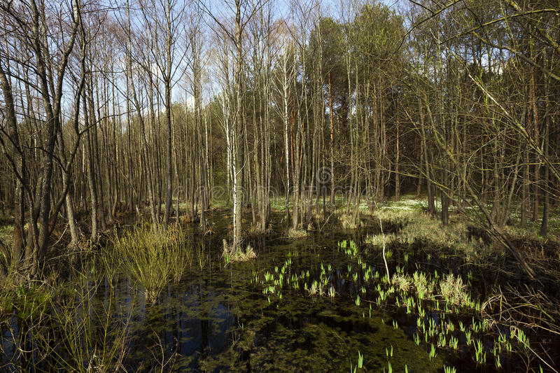 De moeraslente, sluit omhoog royalty-vrije stock afbeeldingen