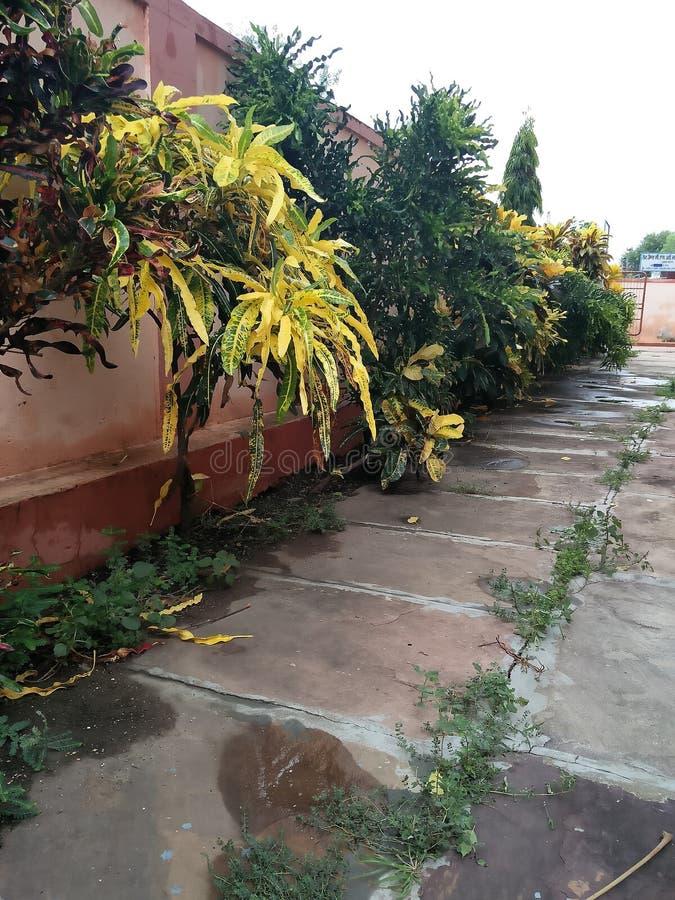 De moesson komt India aan stock foto