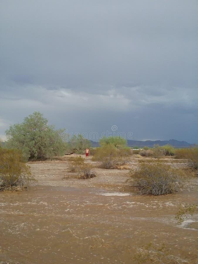 De moesson van Arizona royalty-vrije stock afbeeldingen