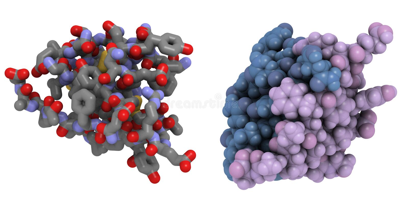 De molecule van de insuline vector illustratie