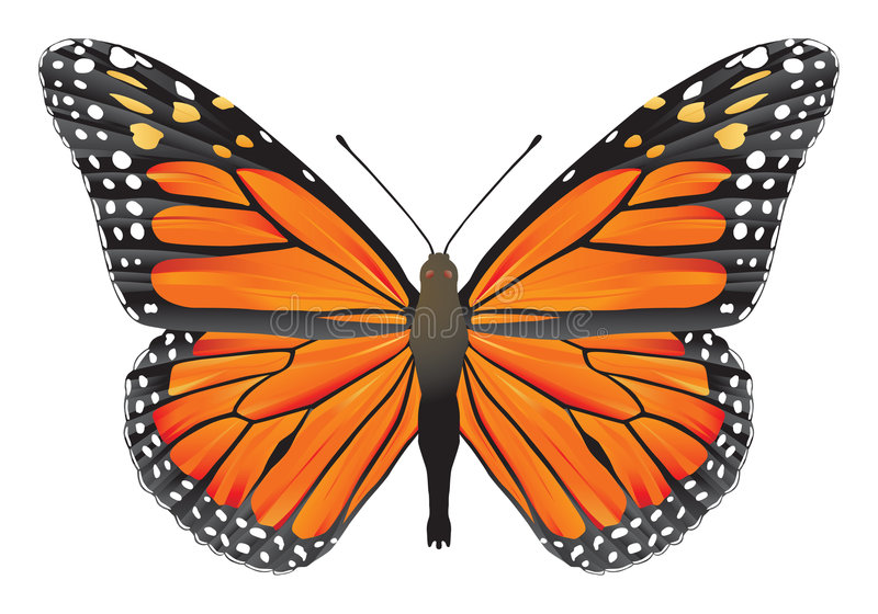 De monarch van de vlinder stock illustratie