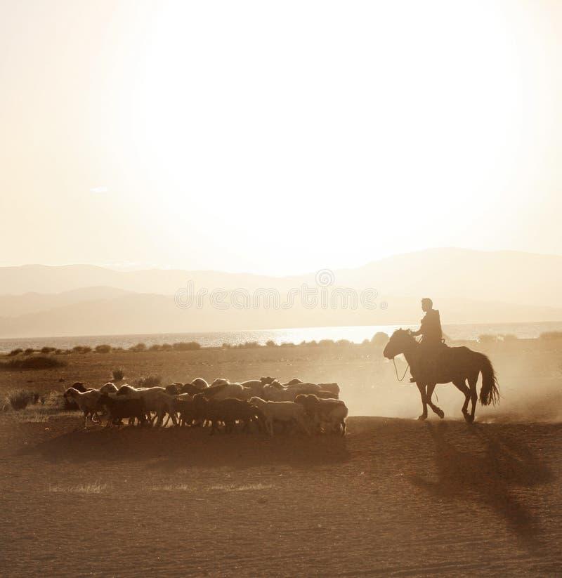 De Mongoolse jongen dreef kudde van sheeps stock foto