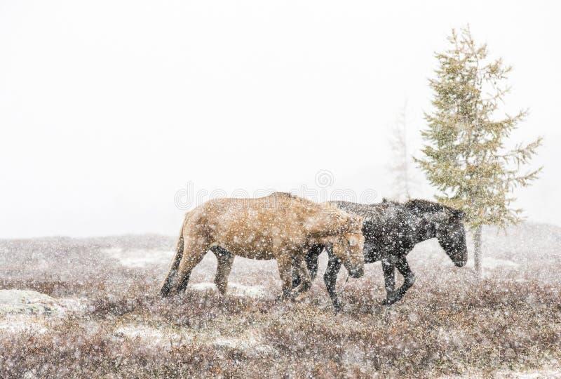 De Mongoolse ruiters met hun paarden in een sneeuw stormen royalty-vrije stock foto