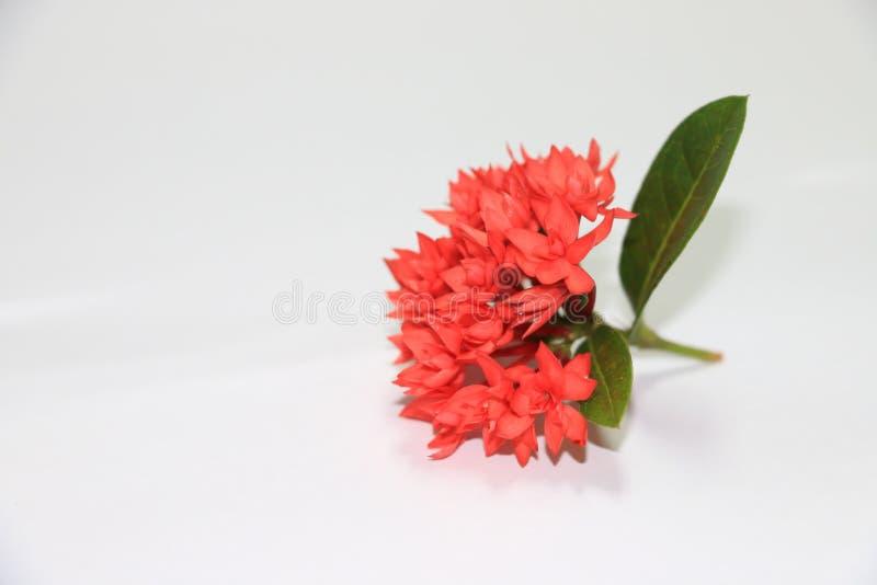 De mooie aar rode bloemen royalty-vrije stock foto's