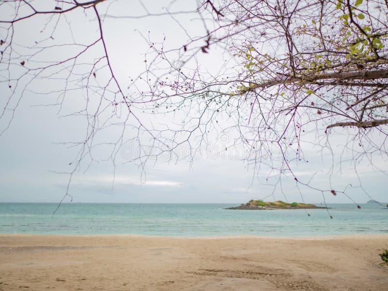 De mooie Aard van de Boomtak naast tropische idyllische strandoceaan royalty-vrije stock foto