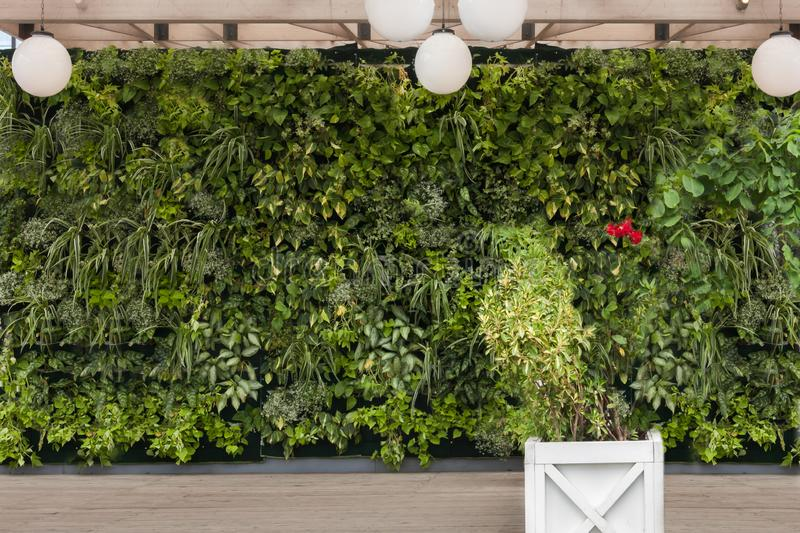De mooie aardachtergrond van verticale tuin met het tropische groene planten doorbladert met bloem vierkante houten pot stock afbeeldingen