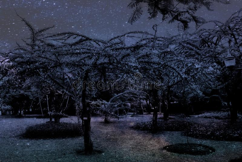 De mooie abstracte textuur kleurrijke zwart-witte bloemen en de boom planten boslandschap op de duisternis en dageraadpoolsters royalty-vrije stock foto's