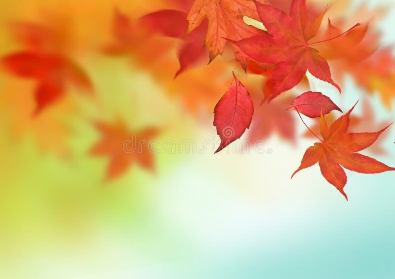 De mooie Achtergrond van de Herfst stock afbeeldingen