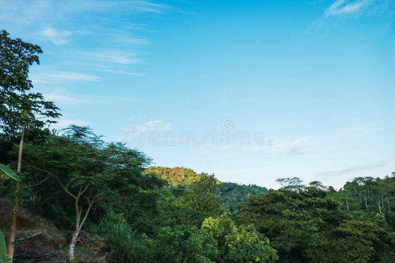 De mooie achtergrond van het aardlandschap het panorama van tropische wildernis en berg royalty-vrije stock foto