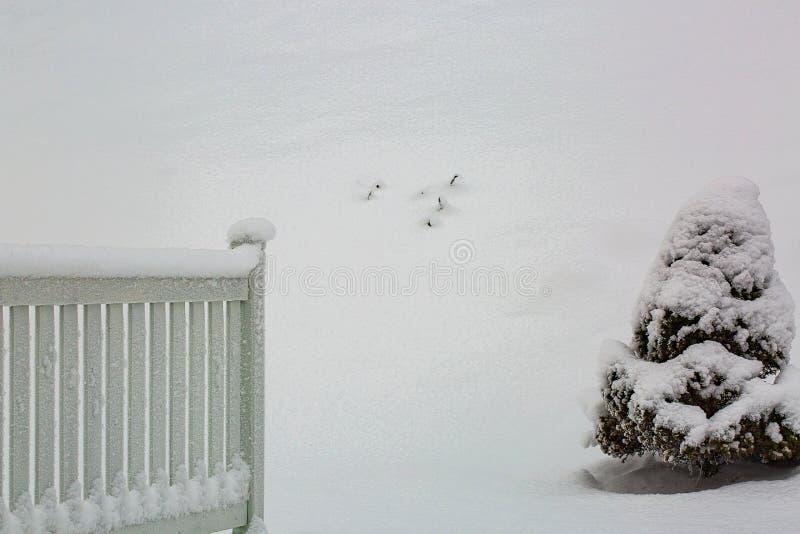 De mooie achtergrond van de sneeuwwinter Witte houten die tuinomheining en naaldboomboom met sneeuw wordt behandeld stock foto