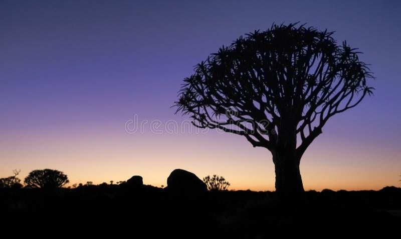De mooie Afrikaanse gloed van de zonsondergangnacht met gesilhouetteerde Quiver boom stock afbeelding