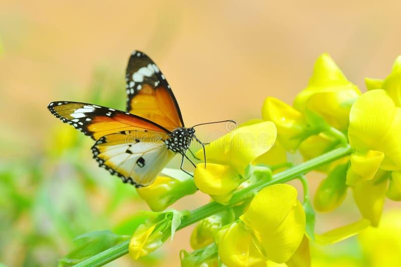 De mooie bidsprinkhaan in de forestBeautiful vlinder blijft op mooie bloemen stock foto