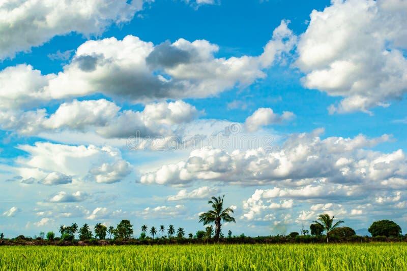 De mooie blauwe hemel en de witte bewolkte achtergrond over padievelden in plattelandslandschap van Thailand, kijken vers en groe royalty-vrije stock afbeeldingen