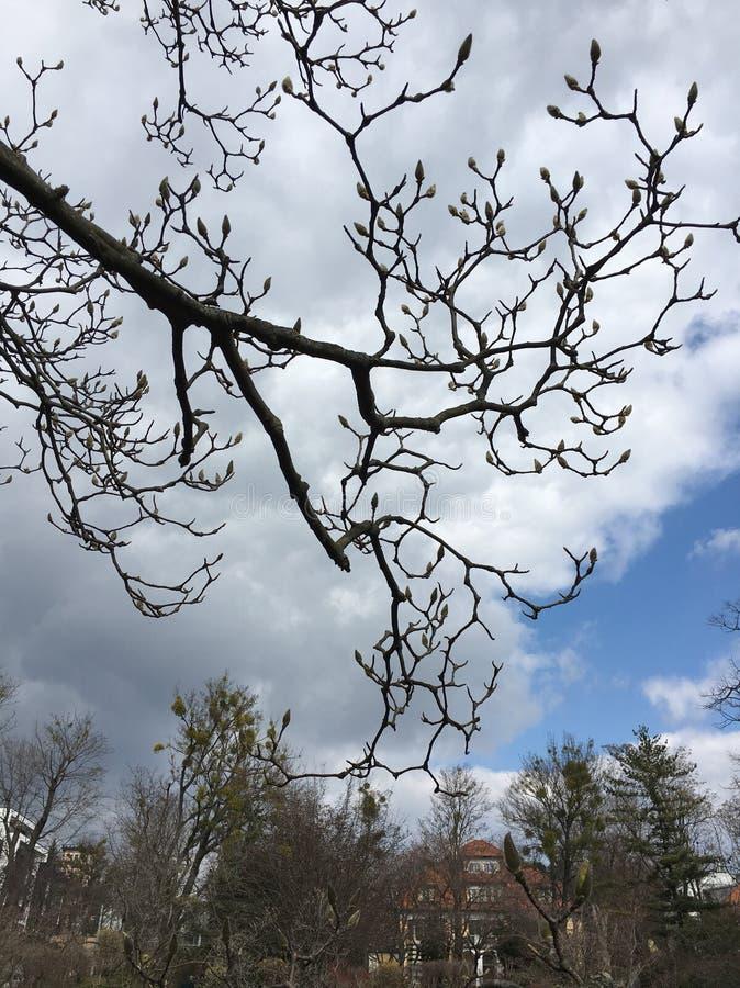 De mooie blauwe lente skyscape royalty-vrije stock foto's