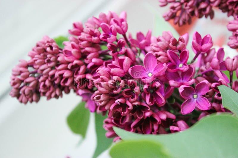 De mooie bloei van de lente roze bloemen stock foto's