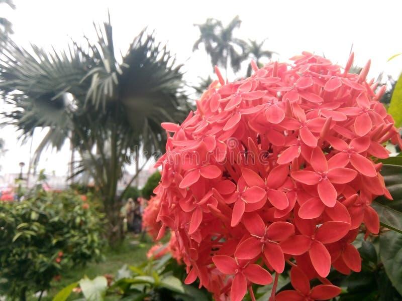 De mooie bloem stock foto