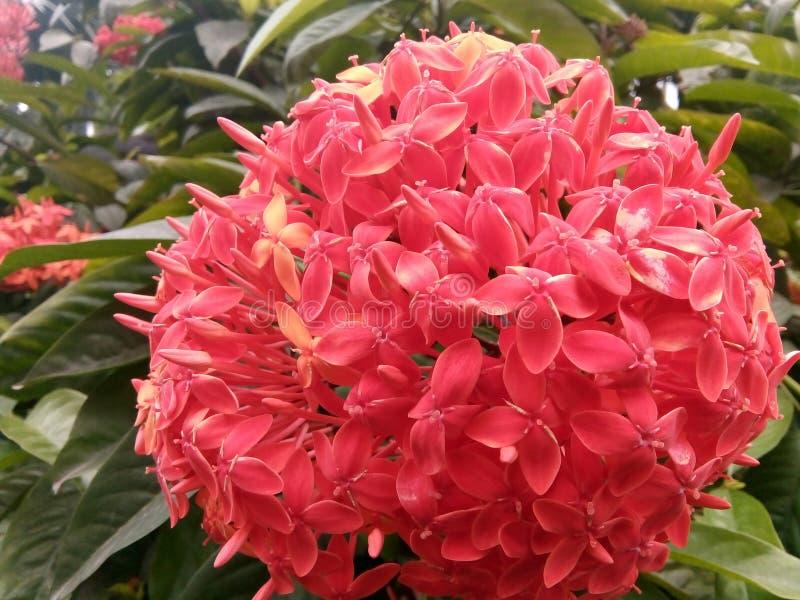 De mooie bloem royalty-vrije stock fotografie