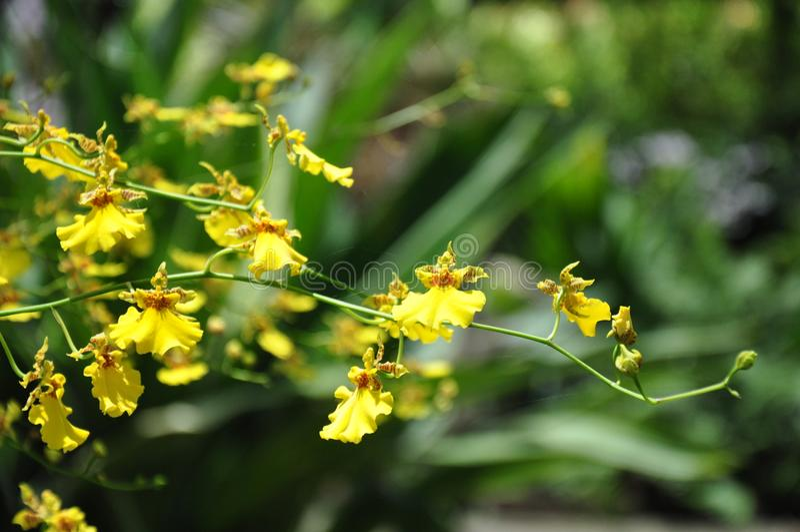 De mooie Bloem van de Orchidee royalty-vrije stock foto