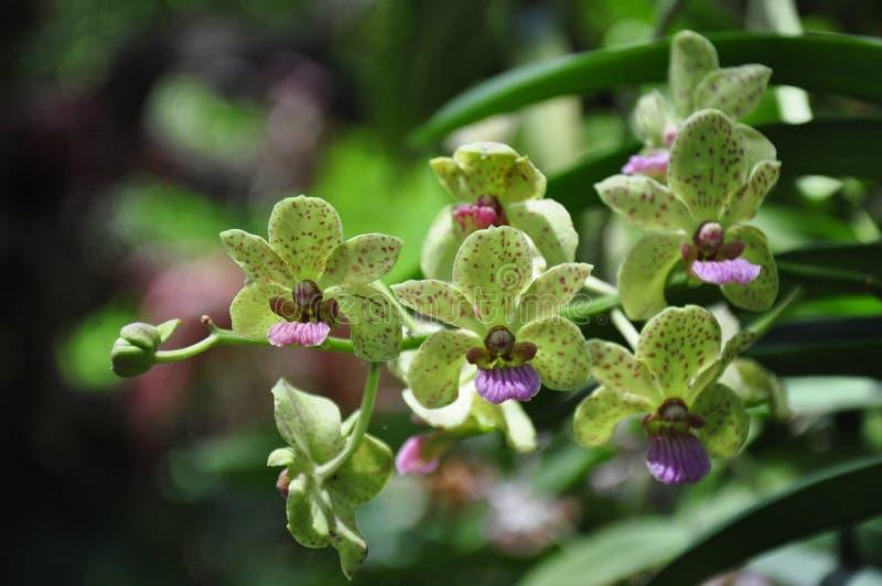 De mooie Bloem van de Orchidee stock afbeeldingen