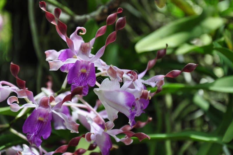 De mooie Bloem van de Orchidee stock foto