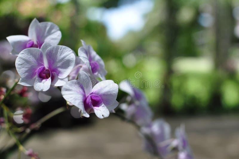 De mooie Bloem van de Orchidee stock afbeelding