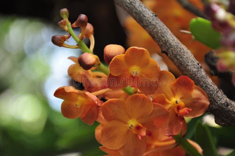 De mooie Bloem van de Orchidee royalty-vrije stock afbeeldingen